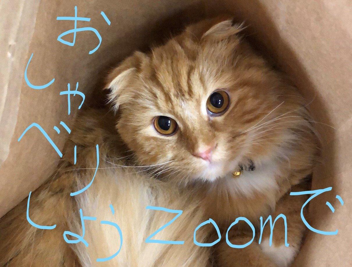 【開催案内】試験が終わったら、Zoomでおしゃべりしよう!