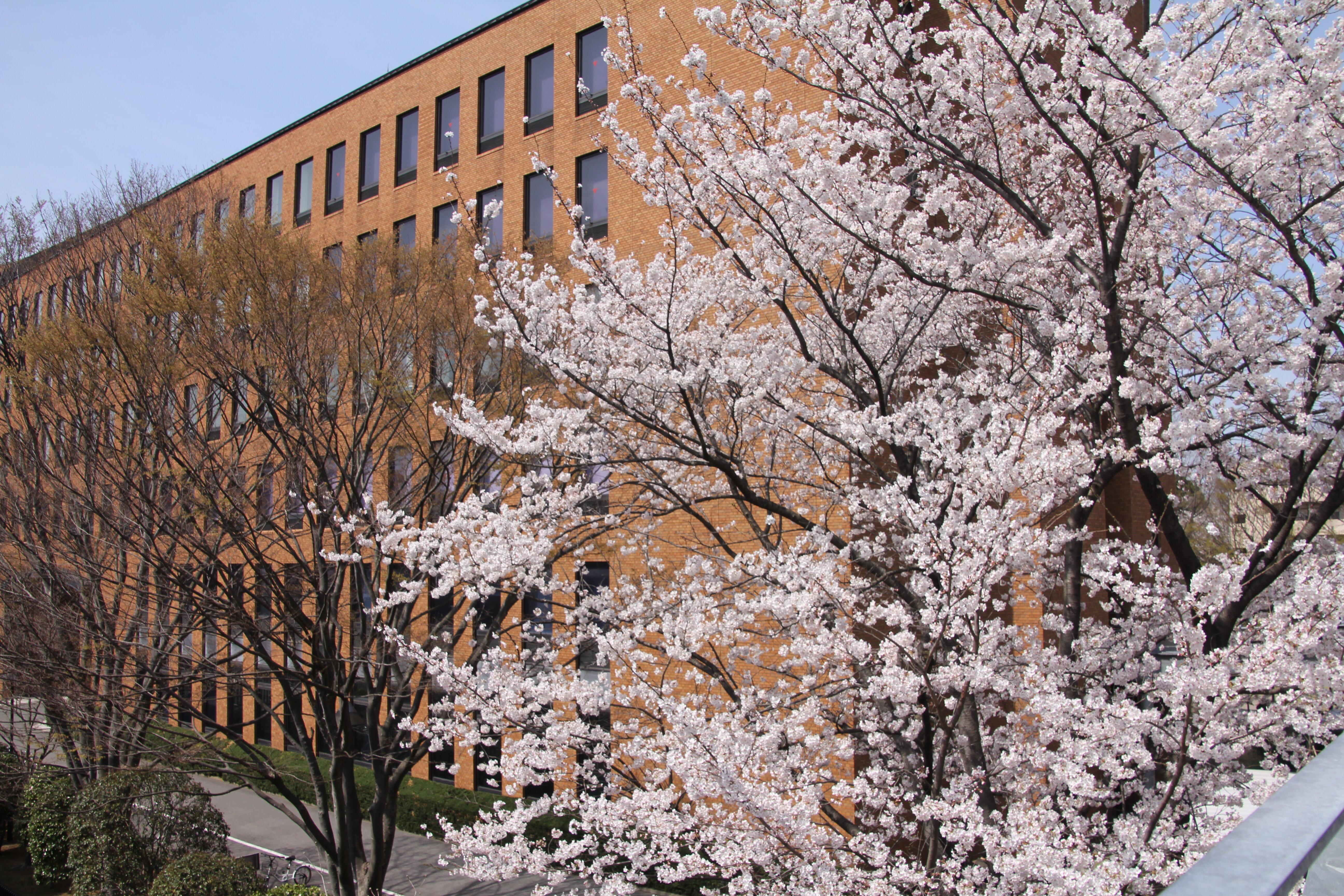 【開催案内】2020年度麗澤大学学位記授与式のご案内