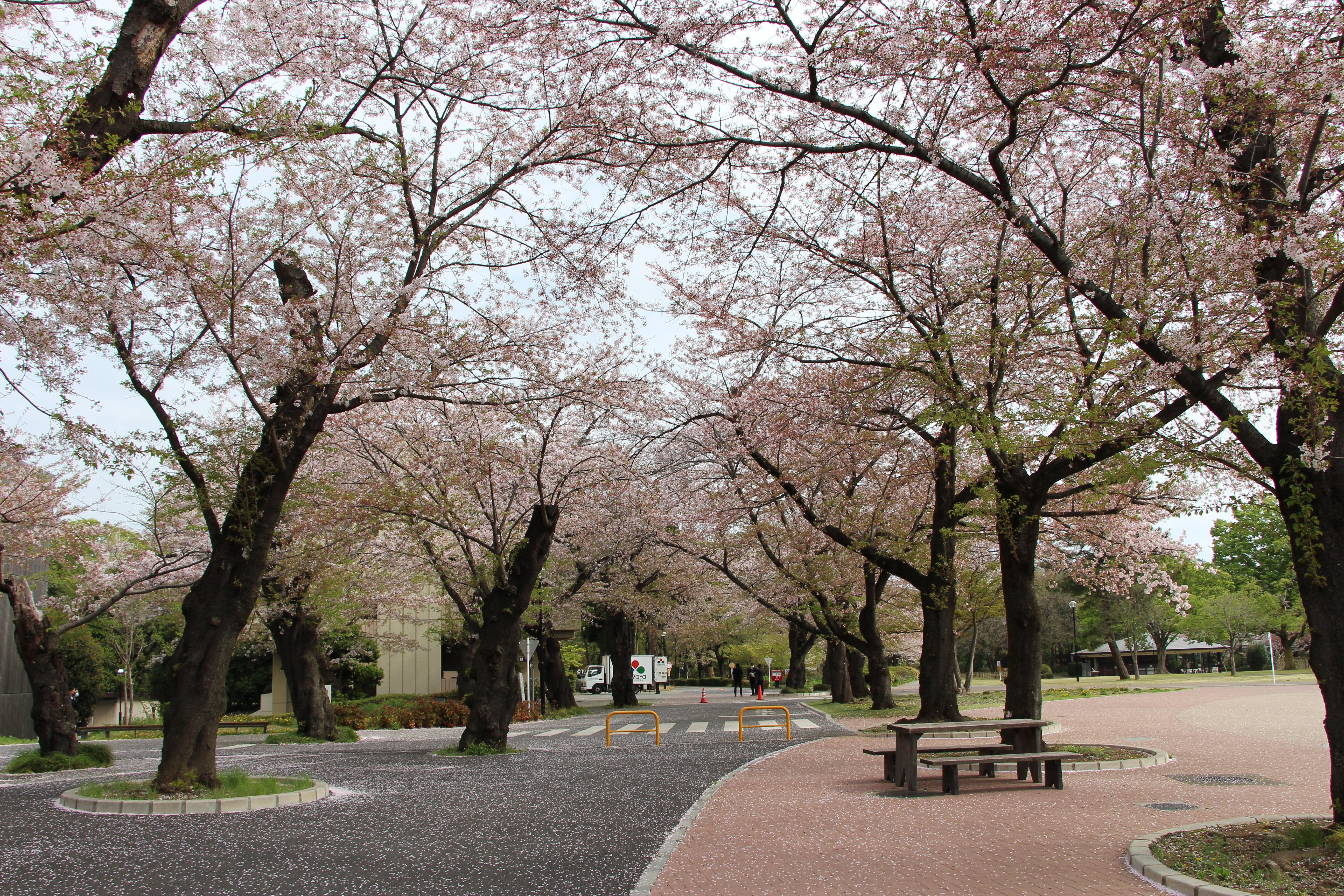 【訃報】田中邦衛氏―麗澤短期大学15期卒業生